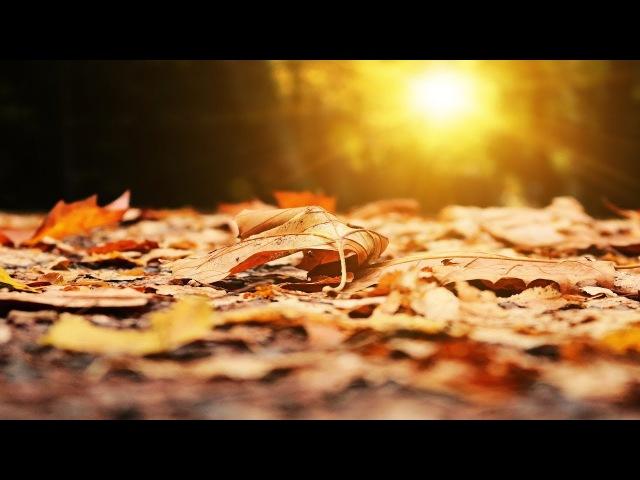 Песня на гитаре про осень и жизнь - Желтый танец | Спокойная и интересная песня по...