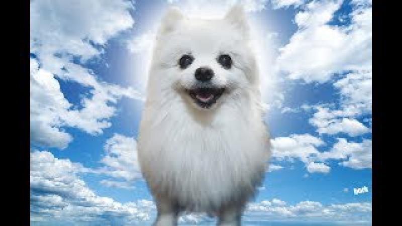 Top 10 Gabe the dog bork remixes