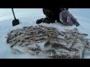 Здарова мужик рыба ловится Рыбалка в СибириFishing in Siberia