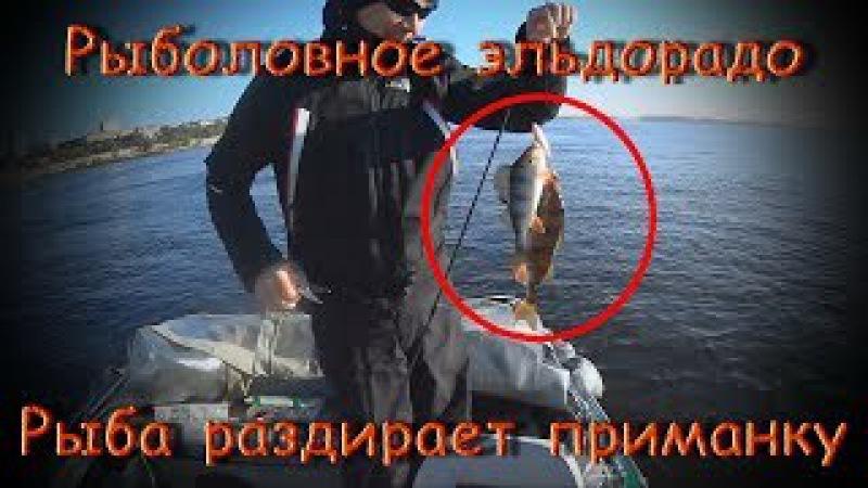 Рыба раздирает приманку. Огромные голавли. Рыболовное эльдорадо на Волге. Рыбал ...