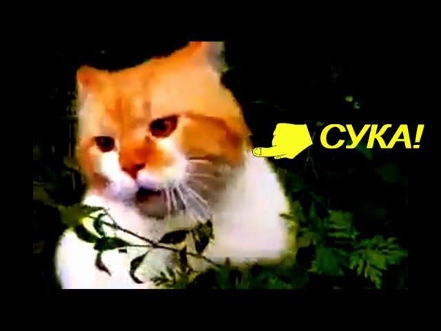 Обдолбаный кот говорит Ой чуваки, а потом бросается на оператора