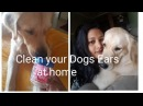 Cleaning My Dogs Ears at Home Short Vlog