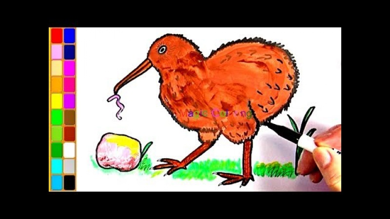 How to Draw a Kiwi Bird Drawing and Coloring Cartoon Birds for Kids