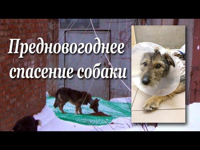 Предновогоднее спасение собаки