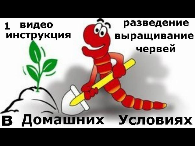 1. Инструкция выращивания червей в домашних условиях. Все секреты разведения дождевых червей. » Freewka.com - Смотреть онлайн в хорощем качестве