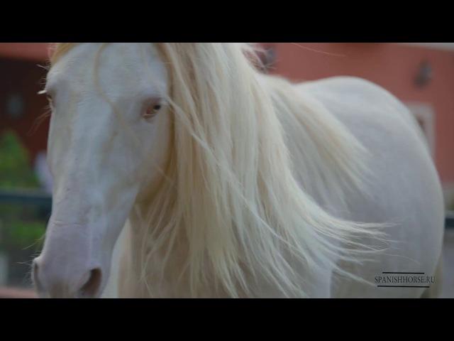 Продажа лошади в Испании, есть доставка