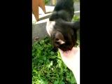 кот кушает арбузы?