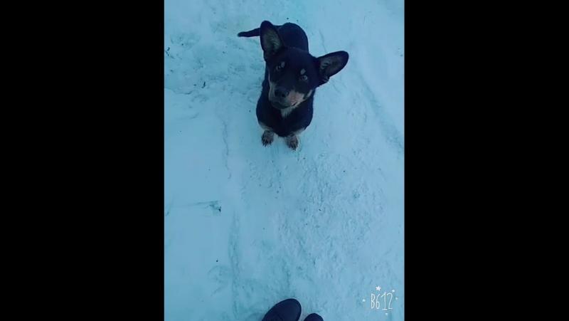 Моя собака Малыш
