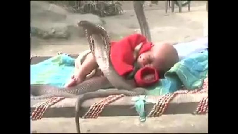 Кобра охраняет сон малыша