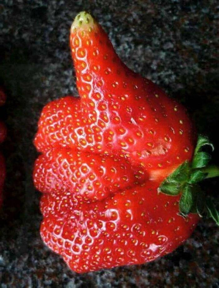 Фото подборка причудливые фото овощей и фруктов. (31фото)