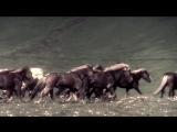 Tengger Cavalry - War Horse (2016)
