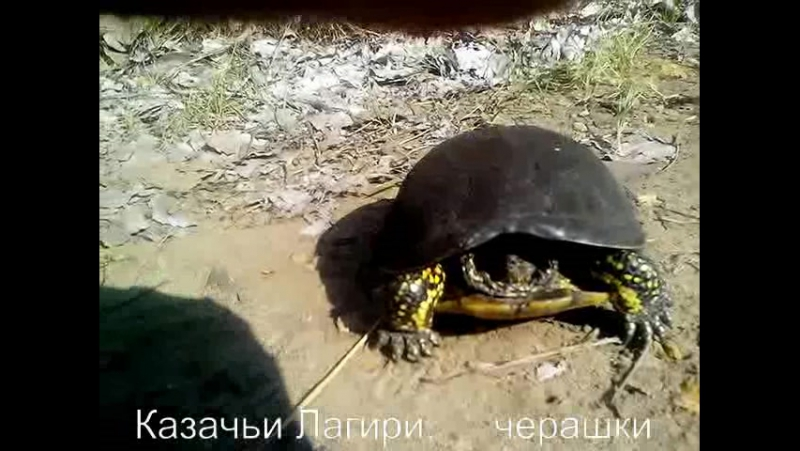 21.06.2017г Черепаха, Казачьи лагери
