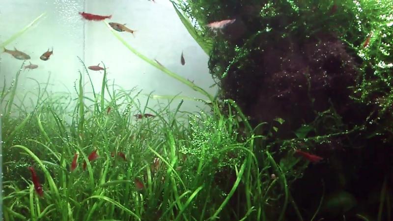 Нано аквариум 20л