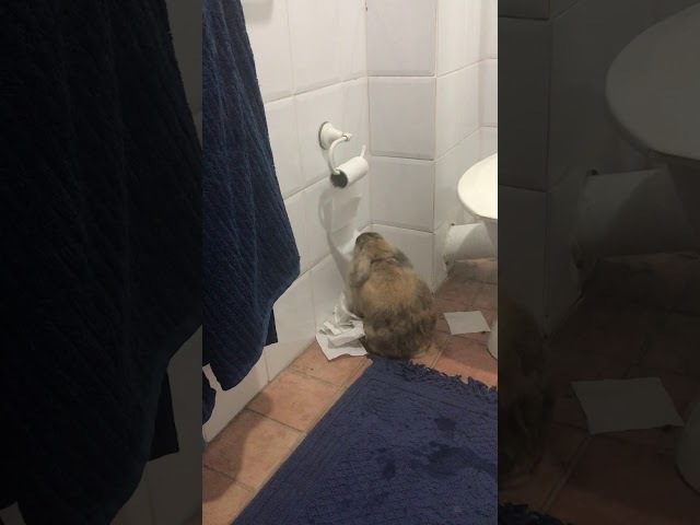 Rabbit entertaining self with toilet paper - 986177