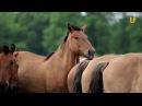Глазами животных 289 (Уфимский конный завод №119 и башкирская порода лошадей)