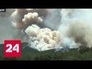 Север России и юг Европы охватили лесные пожары
