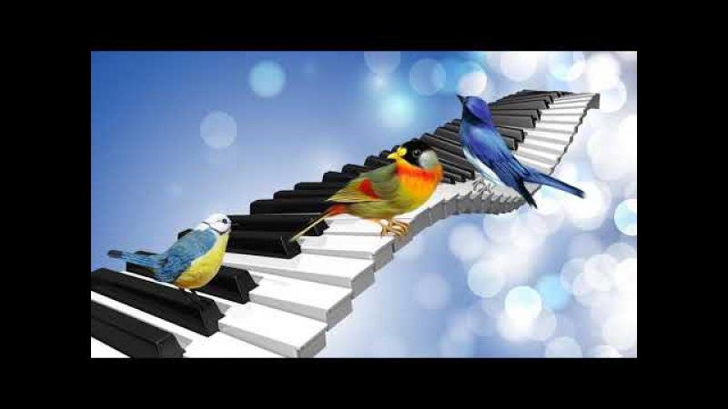 Ласкающее пение птиц под аккомпанемент мелодичного пианино