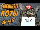 Смешные кошки и коты 2018 ДО СЛЁЗ Приколы с котами и кошками Funny Cats compilation