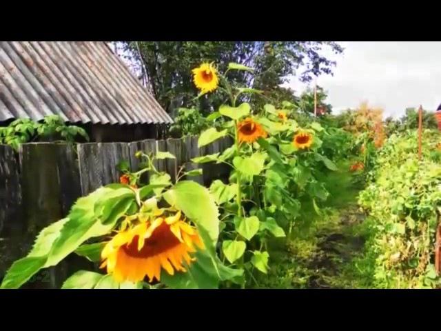 Гарна пісня Не так цвітуть сади в чужому країчужина