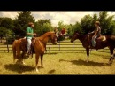 Фильмы про Лошадей Томми и волшебный Мул 2009