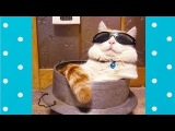 Funny Cats Wearing Glasses For The First Time Top Cats Video Compilation