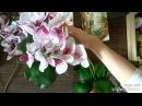 Мастерская Альфии 🌸 Орхидеи для подружки💖