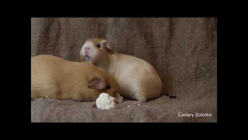 Искорка и Лапушка: чудовищное происшествие во время съёмок