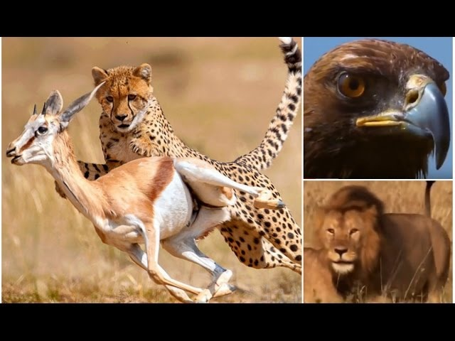 Выживание в саванне в мире животных, дикая природа - видео