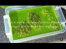 Консервация цветов. Живой мох в интерьере. Стабилизированный мох. Приготовление- часть 2