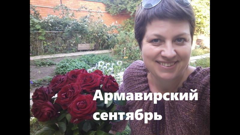 Армавирский сентябрь Вита Власс