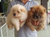 Top 10 Dog Breeds That Look Like TEDDY BEARS Great Viral Video