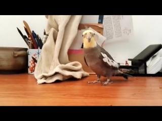 Тот самый попугай безо всяких вставок