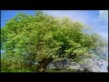 Олег Пахомов - Без тебя (New Version)