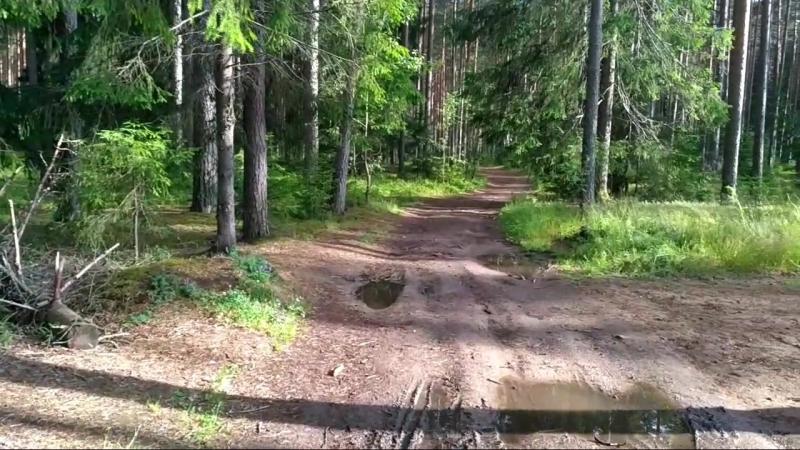 Лес (Рощино)