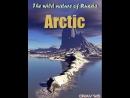 Дикая природа России. Арктика. Серия 5 Германия 2008