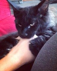"""The Escobar Cat 🐾 on Instagram: """"Минутка бешенства 😎 Делаю больно. Качественно. Дорого."""""""