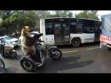 Ничего необычного, просто медведь в люльке