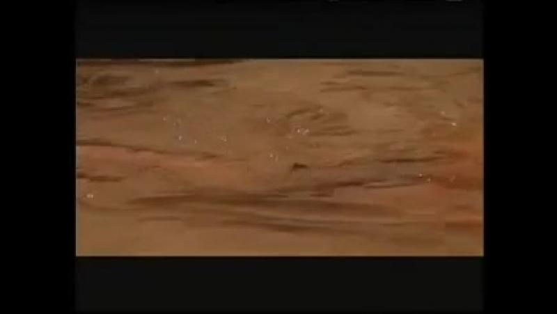 отрывок из фильма Маленький Будда