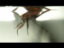 Войны жуков гигантов Monster bug wars 13