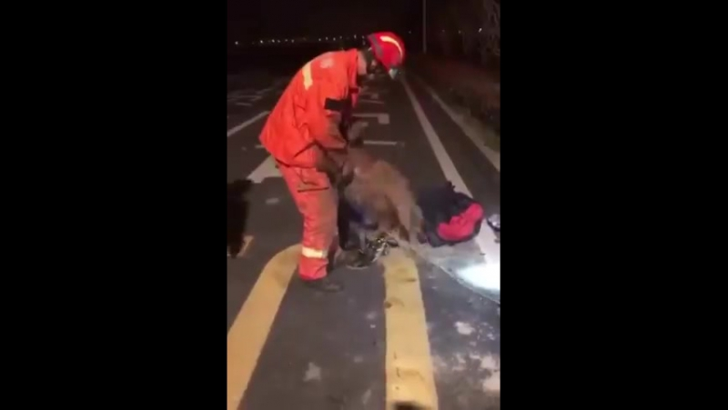 Собака благодарит пожарного за спасение ...