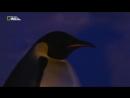 Дикая Антарктика . Мир Животных .Документальный фильм о пингвинах