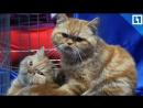 Кошки нашли семью в Москве