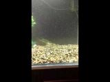 щука в аквариуме