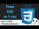 Учим CSS за 1 час! От Профессионала