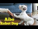 Sony's Aibo Robot Dog returns with advanced AI