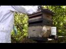 Produção Propolis Vermelha Casa das Abelhas