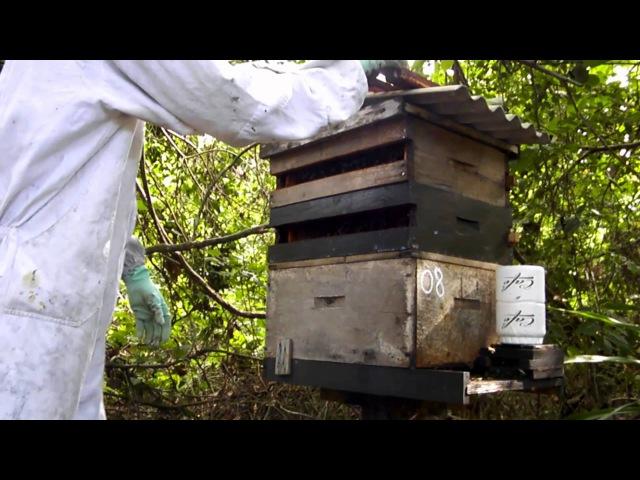 Produção Propolis Vermelha | Casa das Abelhas