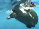 Битва за выживание в водах океана Документальный фильм