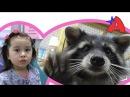 ВЛОГ Контактный Зоопарк для детей Кормим гладим играем с животными