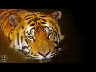 Видео 4К UHD Природа от которой захватывает дух